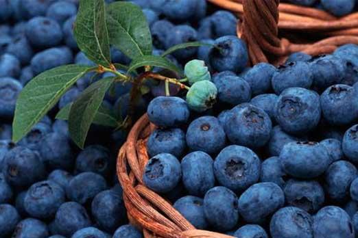 www.alsumaria.tv/ExtImages/635949316987842542-blue