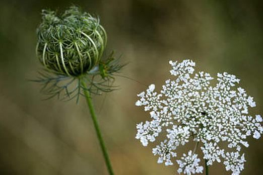 Four Herbs That Act As Natural Birth Control Hi Tech Fun