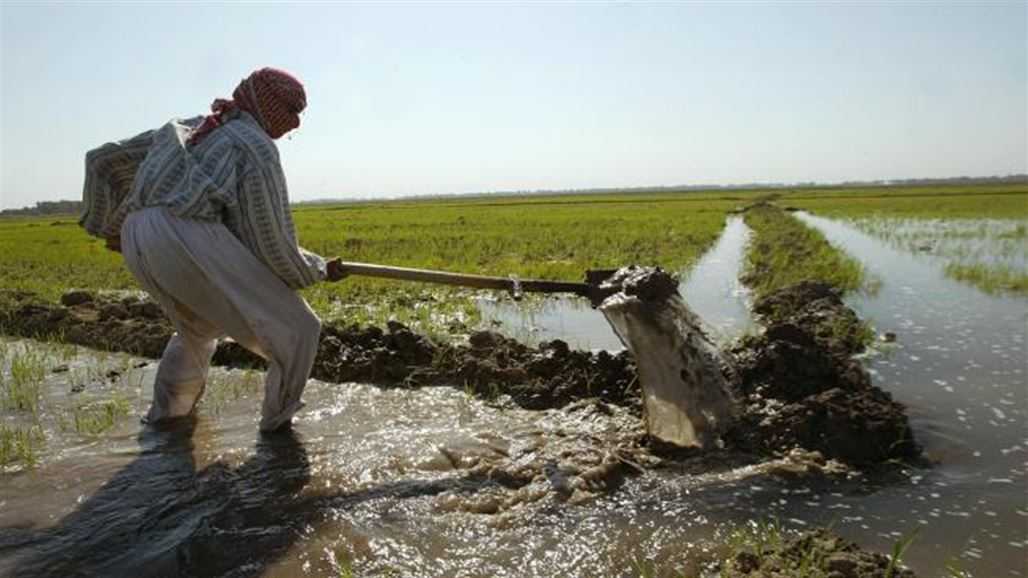 Iraq prohibits eight crops from summer because of the water crisis NB-239573-636648431519265316